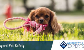 Backyard Pet Safety
