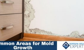 Common Areas For Mold Growth Homeowners Should Know About