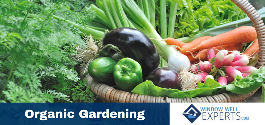 How to Garden Organically in Your Backyard