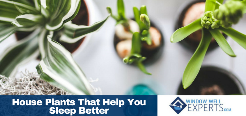 House Plants That Help You Sleep Better