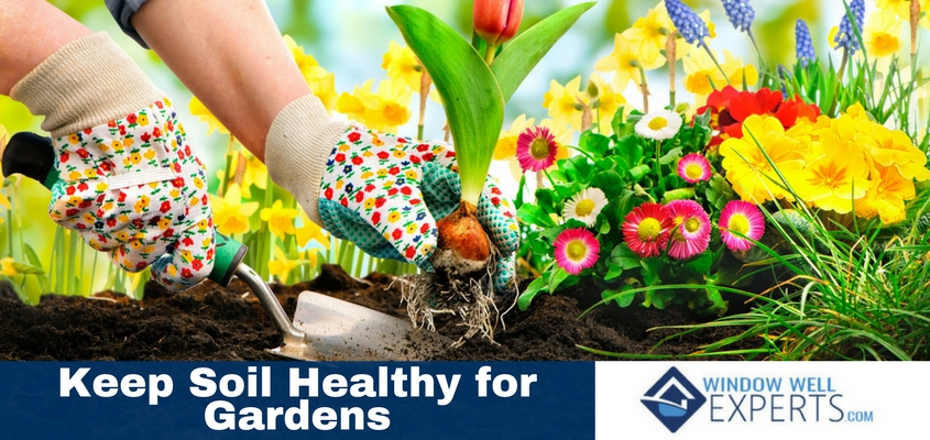 How to Keep Your Soil Healthy For Gardens