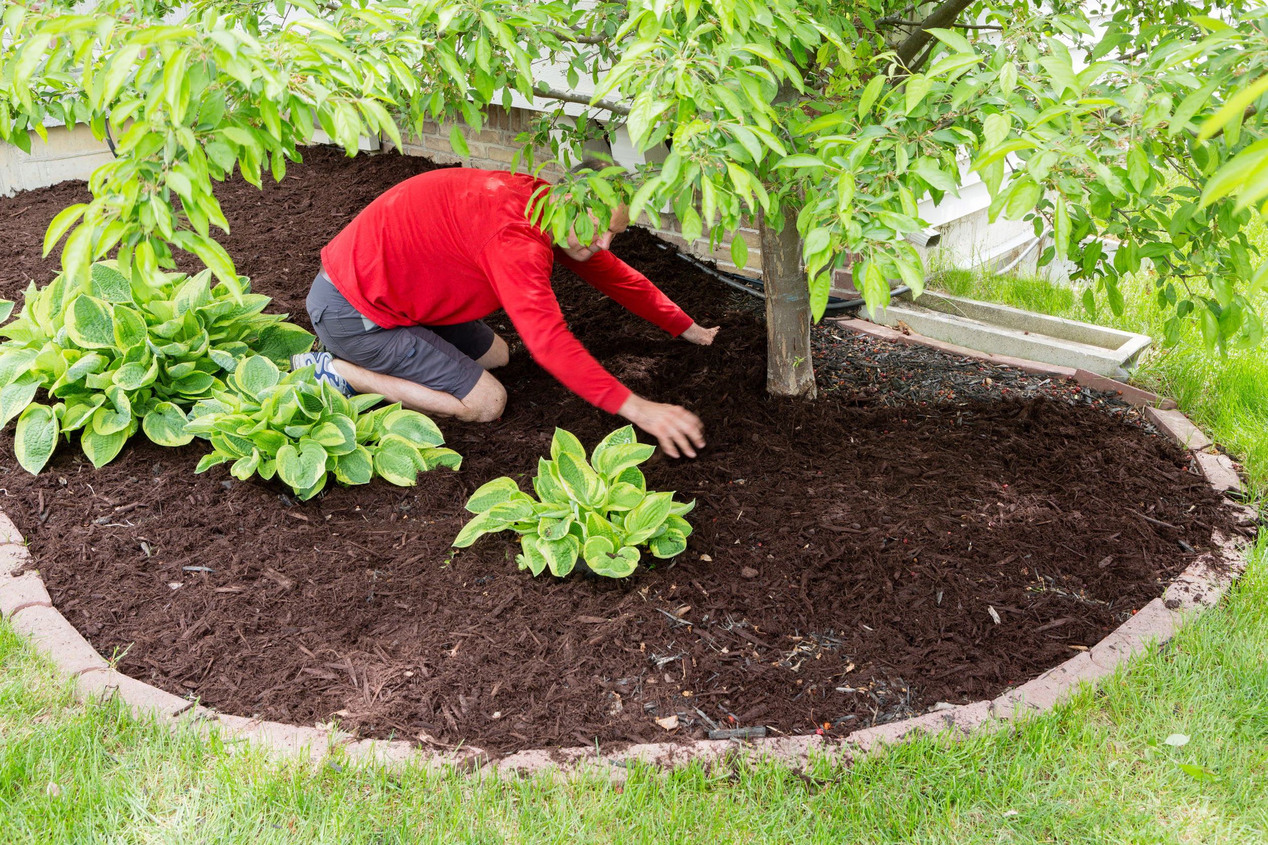mulching plants in backyard