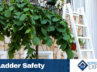 Ladder Dangers and Safety Tips