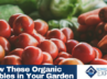 Organic Vegetables and Herbs to Grow in Your Garden