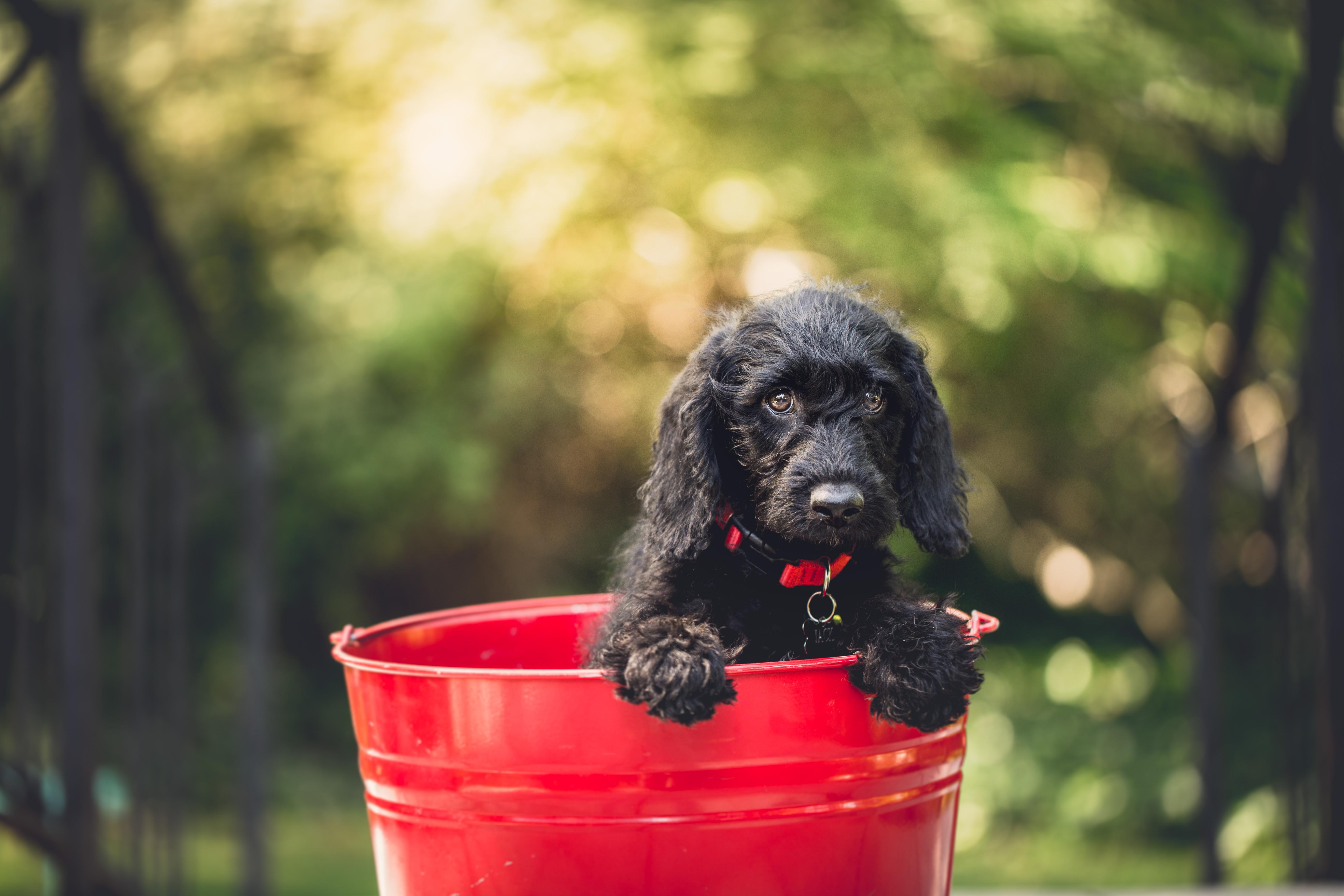 dog in a red bucket