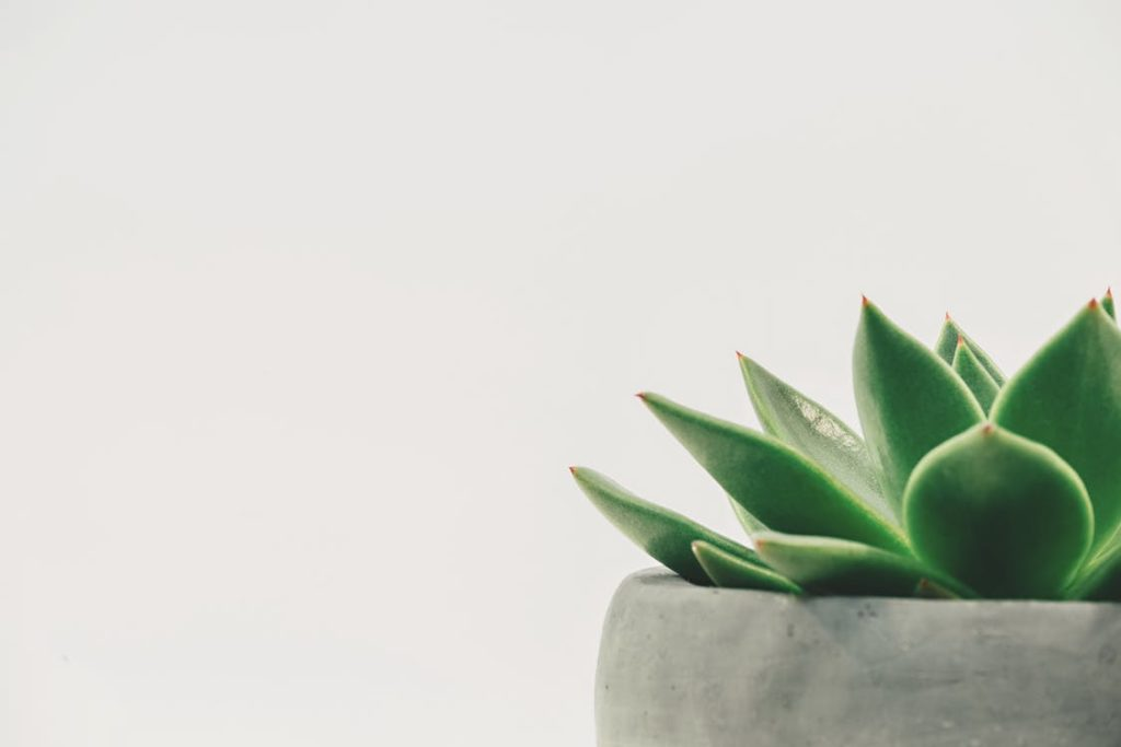 small house plant