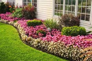Ways to Beautify Your Window Wells and Landscape 1